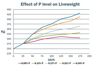 Effect of Phosphorus level on Liveweight